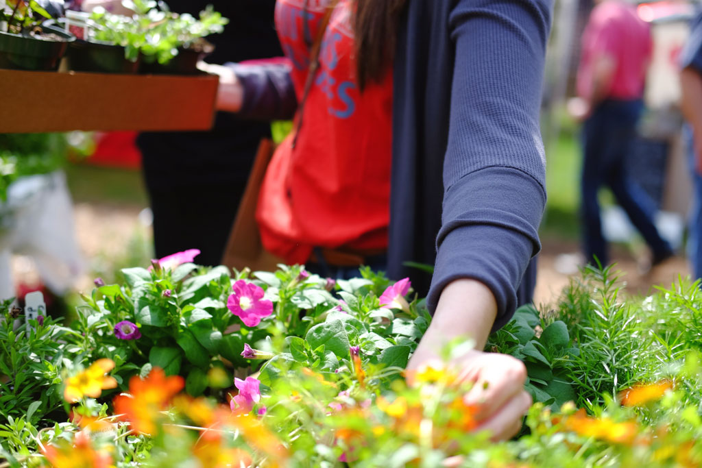 Small Business Owner Tip to Reduce Stress: Start a Garden